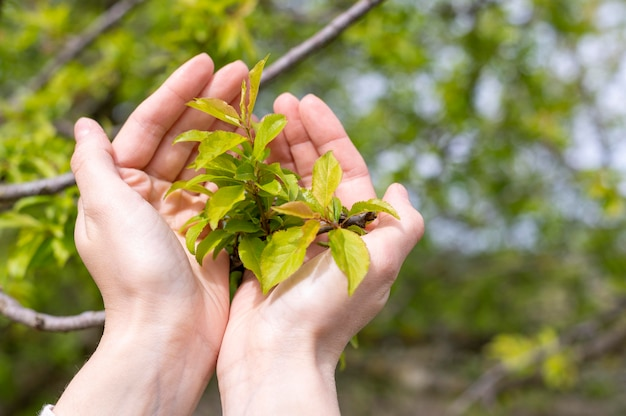 Woman holding tree leaves in hands
