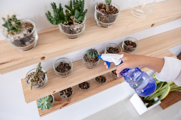 A woman holding and using a water bottle to water cactus on wooden shelf in the house