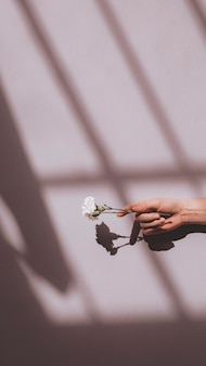 Woman holding a white carnation against a pink wall