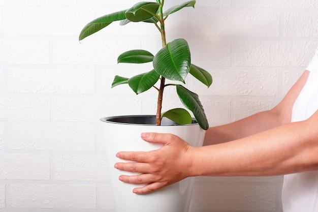 大きな植物と白い鍋を保持している女性