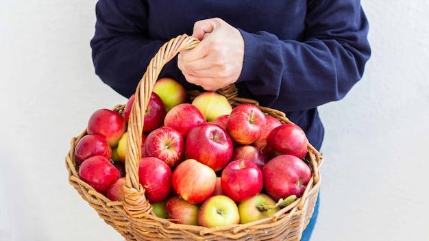 여자는 흰 벽, 정원에서 신선한 수확의 배경에 빨간색과 노란색 사과와 큰 바구니를 보유하고