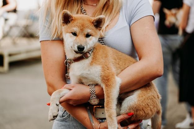 女性は秋田の子犬を両腕に抱えています。夏の日にペットと一緒に歩く