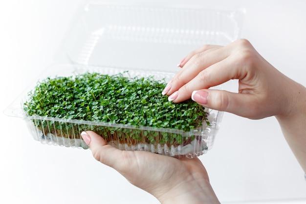 여자는 플라스틱 상자 손 클로즈업에서 미세 녹색 식물의 새싹을 잡고 돌본다