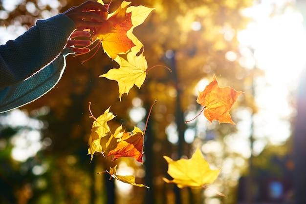 女性は秋の公園で彼女の手でカラフルなカエデの葉を保持します