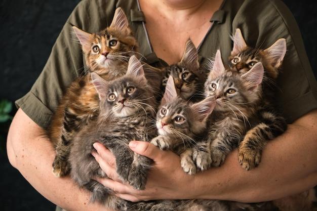女性はかわいい子猫を手に持っています