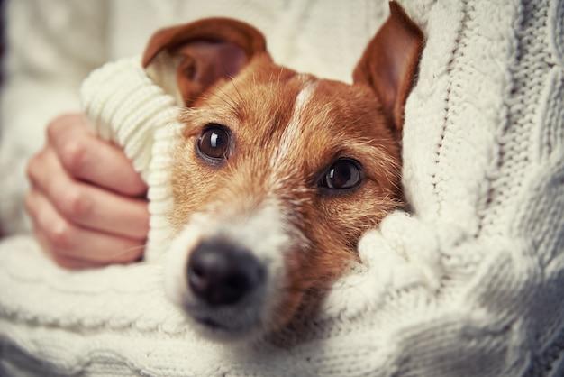 여자는 그녀의 손에 개를 보유하고있다. 애완 동물 관리 개념