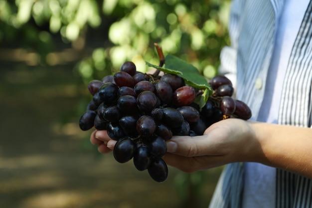 Женщина держит свежий спелый виноград с листьями на открытом воздухе
