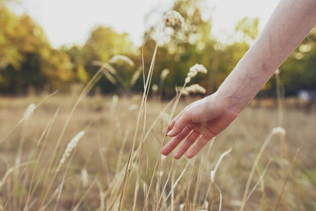 女性は、夏休みの野原や木々で自然の中で小麦を手にしています。
