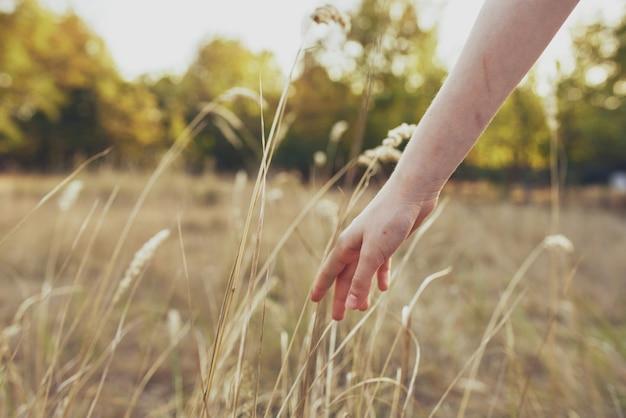 Женщина держит руку на пшенице на природе в поле и деревья летние каникулы