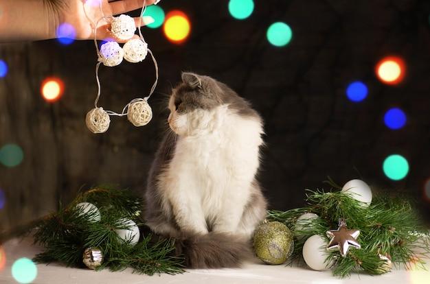女性はクリスマスツリーの下に猫を抱きます。自宅のクリスマスツリーの近くに猫を持つ女性