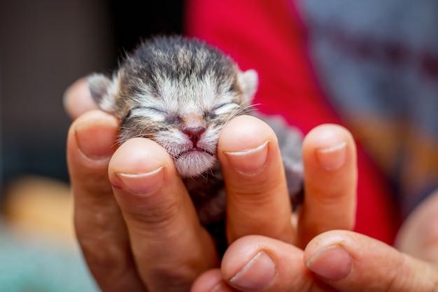 여자는 그녀의 손에 갓 태어난 아기의 작은 무방비 새끼 고양이를 보유