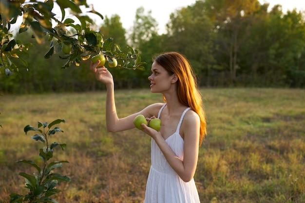 필드에 있는 여자는 나무 자연에서 사과를 선택합니다. 고품질 사진