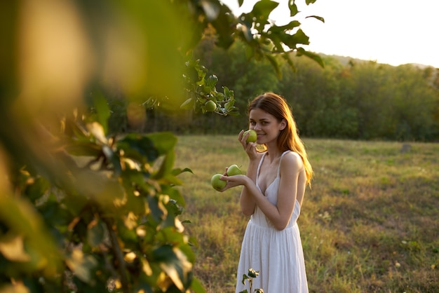 자연 속에서 하얀 드레스를 입은 여성이 과일 나무에서 사과를 따고 있습니다. 고품질 사진