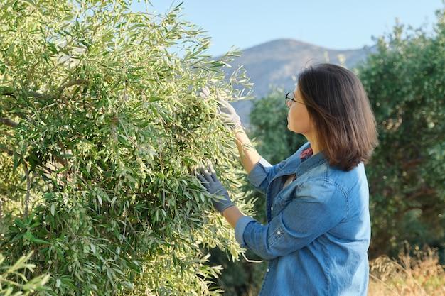 オリーブ畑の女性、山の地中海の風景の中の秋の晴れた日