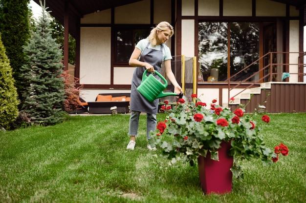 庭の花に水をまくエプロンの女性。女性の庭師は、屋外の植物、ガーデニングの趣味、花屋のライフスタイルとレジャーの世話をします