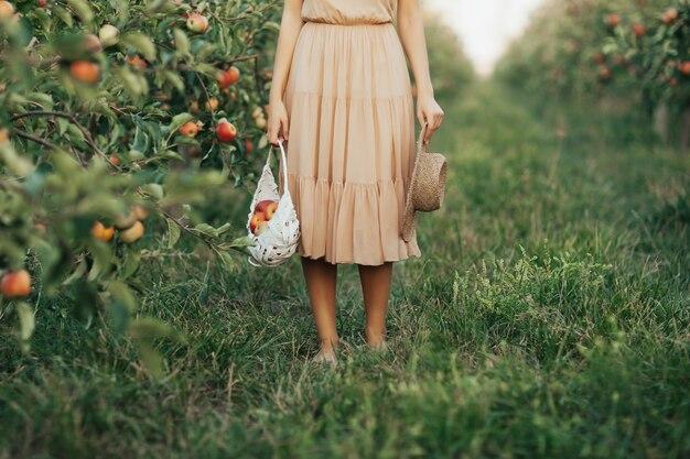 Женщина в платье держит белую корзину со спелыми органическими яблоками в саду или на ферме в осенний день. обрезанный снимок.