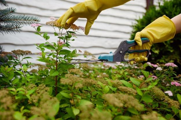 手袋をはめた女性が庭でプルーナーで花を切ります。女性の庭師は、屋外の植物、ガーデニングの趣味、花屋のライフスタイルとレジャーの世話をします
