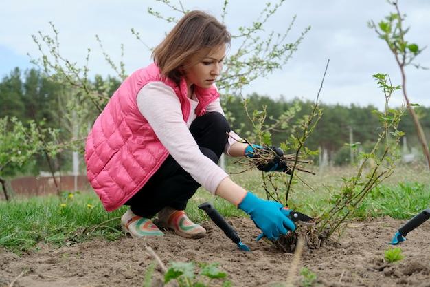 Женщина в перчатках подрезает кусты роз с садовым секатором