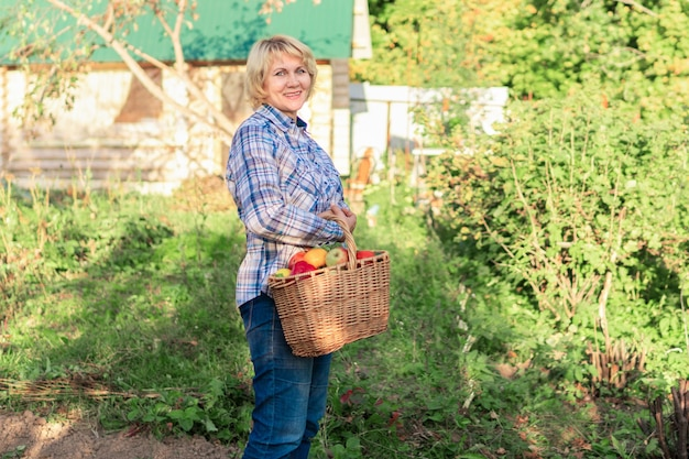 Женщина в джинсах и рубашке с корзиной овощей в саду. женщина средних лет на заднем дворе собирает вкусные и полезные фрукты.