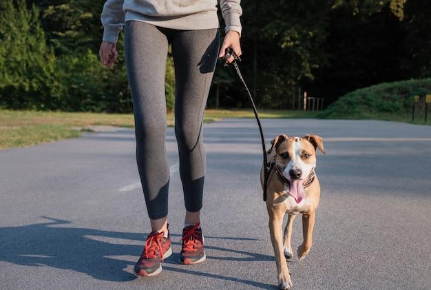 Женщина в тренировочном костюме с собакой. молодая подтянутая сука и стаффордширский терьер делают утреннюю прогулку в парке