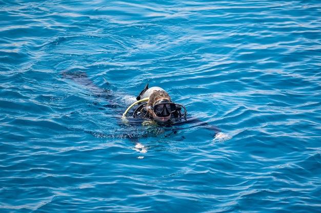 스쿠버 다이빙을 하는 여성은 수상 스포츠와 엔터테인먼트 스쿠버 다이빙을 한 후 푸른 바다 표면에서 수영합니다.