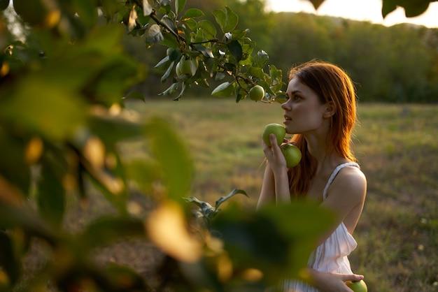 흰 드레스를 입은 여성이 자연 밭에 있는 나무에서 사과를 따다