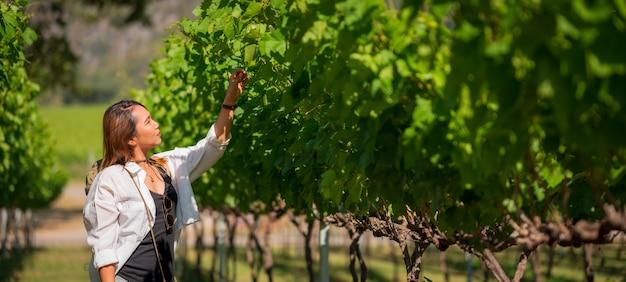 ブドウ園でブドウを検査する女性