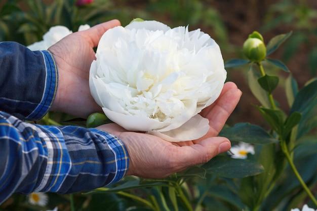 女性は緑の自然な背景で彼女の手のひらに牡丹の花を保持しています。花に選択的に焦点を当てる