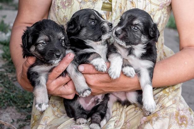 Женщина держит в руках трех щенков, ухаживая за маленькими беззащитными животными