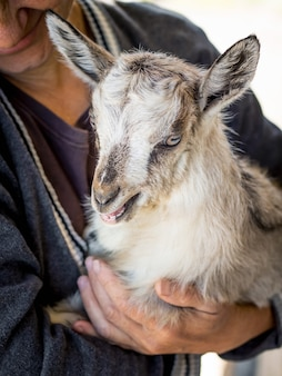A woman is holding a young goatling on her hands. caring for animals. pets and people_