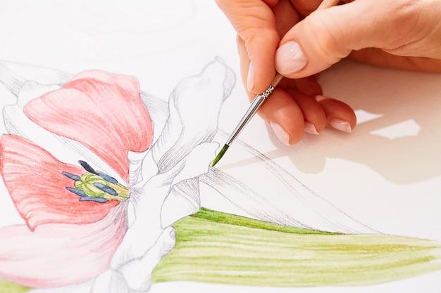 女性はチューリップを描いています