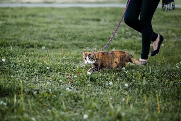 Женщина гуляет с кошкой в парке по свежей траве
