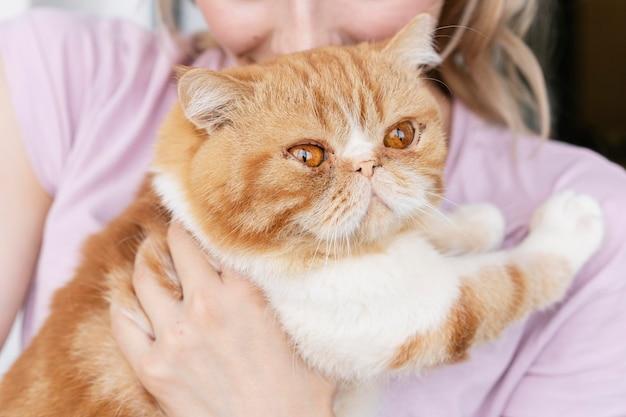 Женщина целует кошку на голове крупным планом