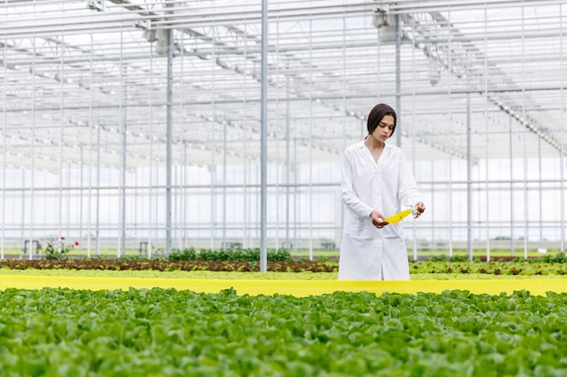 Woman in a laboratory robe with green salad standing in a greenhouse
