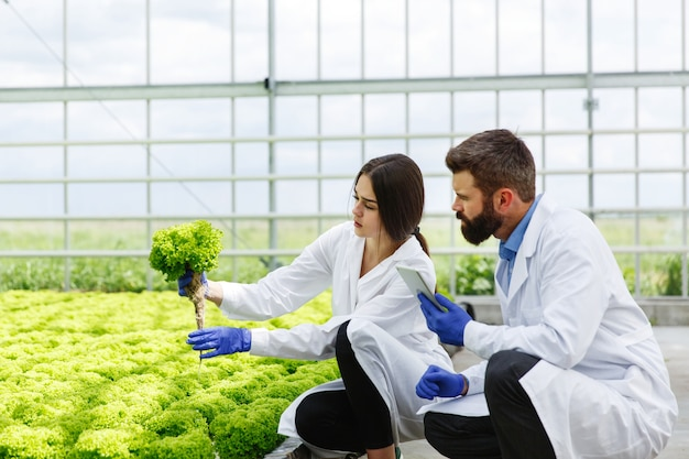 Woman and man in laboratory robes examine carefully plants in the greenhouse