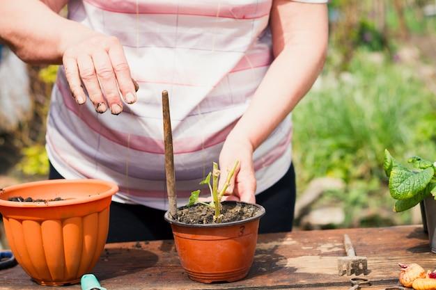 Женщина европейской внешности пересаживает молодой зеленый цветок в коричневые горшки и садовый инвентарь