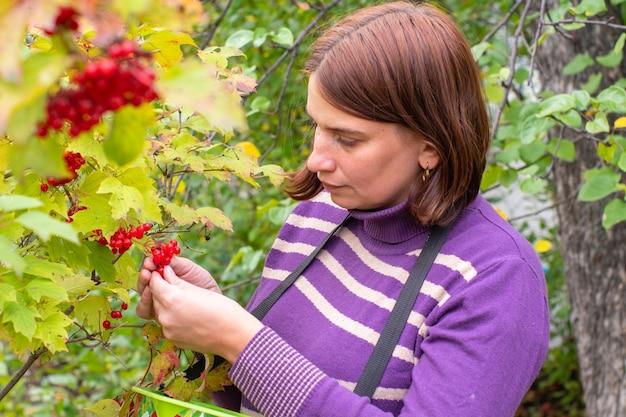 秋の黄色の木の枝から赤い果実を選ぶ女性