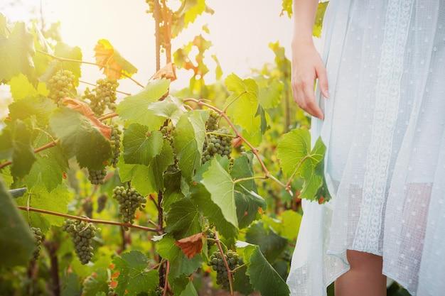 Женщина собирает виноград на винограднике