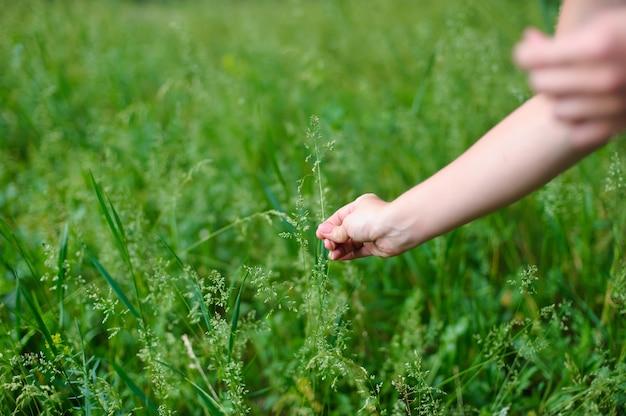 女性は牧草地で植物を選ぶ