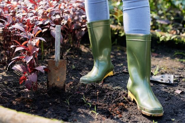 Woman planting red amaranth