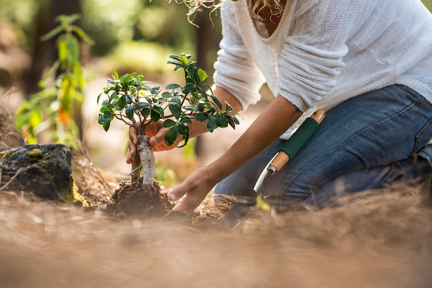 春に庭の地面にひざまずきながら土に小さな苗を植える女性。木の苗木を植える女性の手