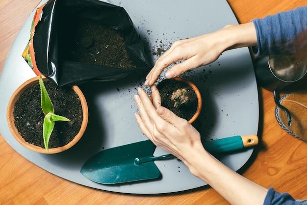 彼女の小さな家の庭に何かを植えている女性