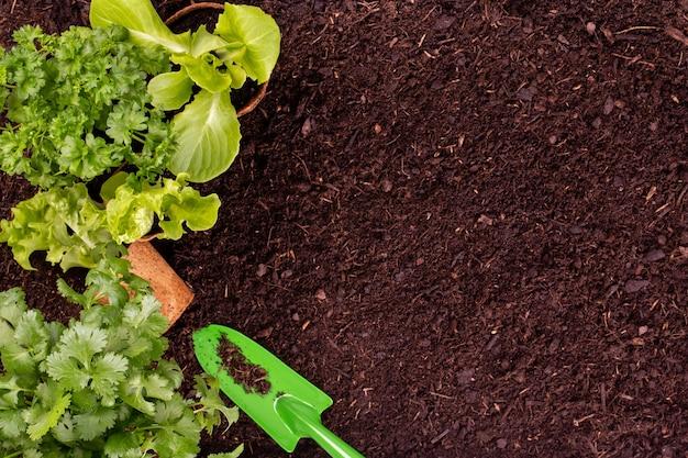 Женщина сажает молодые саженцы салата-латука в огороде