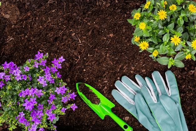 야채 정원에서 양상추 샐러드의 어린 모종을 심는 여자.