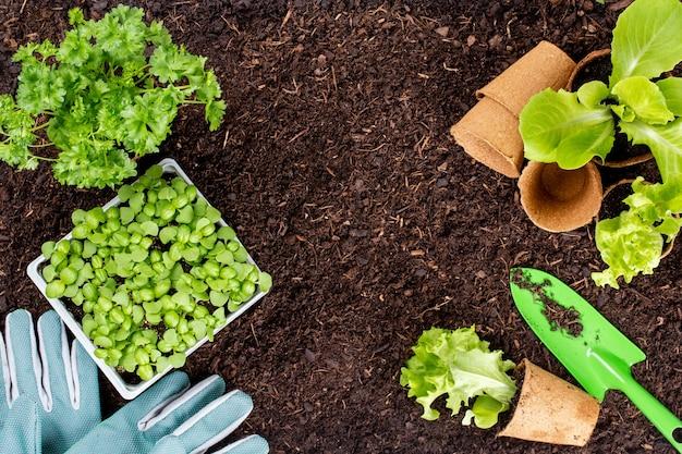 Женщина сажает молодые саженцы салата-латука в огороде.