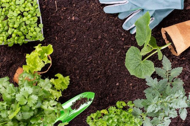 야채 정원에서 양상추 샐러드의 어린 모종을 심는 여자