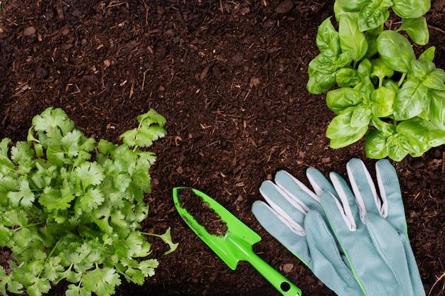 菜園でレタスサラダの若い苗を植える女性