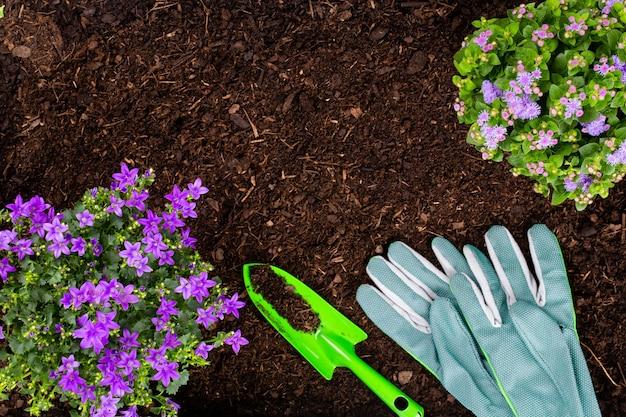 菜園でレタスサラダの若い苗を植える女性。