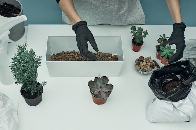 Woman plants indoor plants and flowers in soil and pots