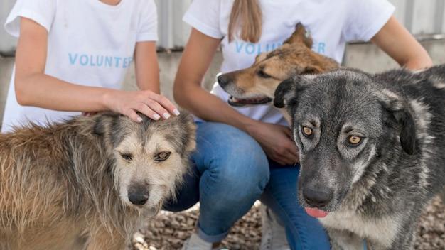 避難所で救助犬と遊ぶ女性